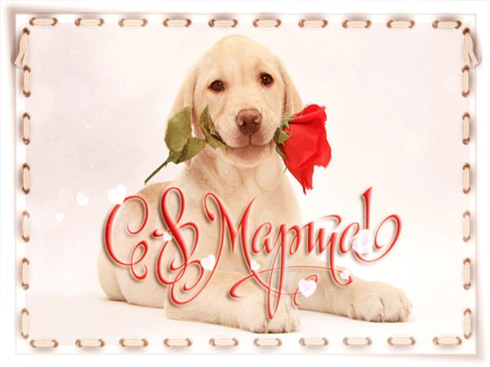 С 8 марта поздравление с животными